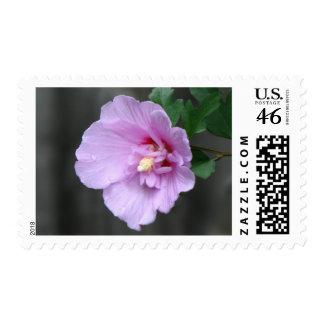 Lavender Chiffon Hibiscus Postage Stamp