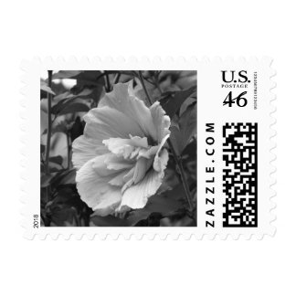 Lavender Chiffon Hibiscus Stamps