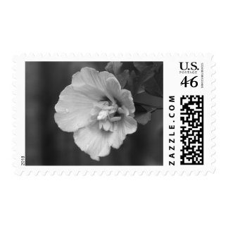 Lavender Chiffon Hibiscus Postage