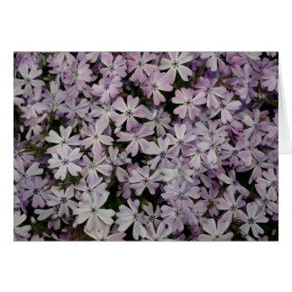 Lavender Creeping Phlox Greeting Card