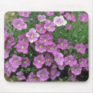 Lavender Cupflower (Nierembergia Hippomanica) flow Mouse Pad