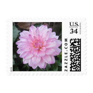 Lavender Dahlia Flower Stamp
