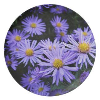 Lavender Daisies Dinner Plate