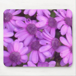 Lavender Daisies Mouse Pads