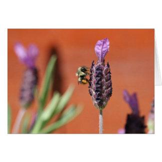 Lavender Delight Card