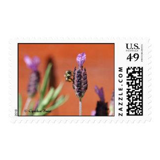 Lavender Delight Postage Stamp