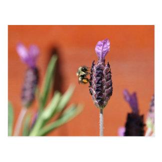 Lavender Delight Postcards