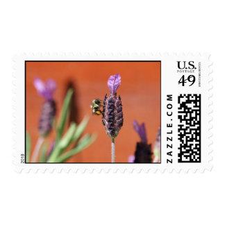 Lavender Delight Stamps