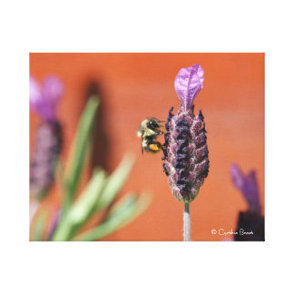 Lavender Delight! Stretched Canvas Print