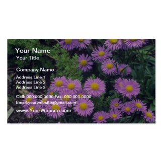 Lavender Dunkle Schone Aster, (Aster Alpinus) flow Business Card Template