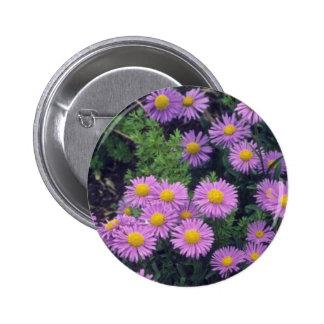 Lavender Dunkle Schone Aster, (Aster Alpinus) flow Pinback Button