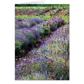 lavender farmfield in impressionist styling card