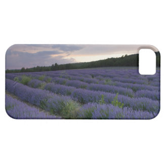 Lavender field at sunset iPhone SE/5/5s case