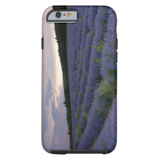 Lavender field at sunset tough iPhone 6 case