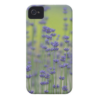 Lavender Field Case-Mate iPhone 4 Case