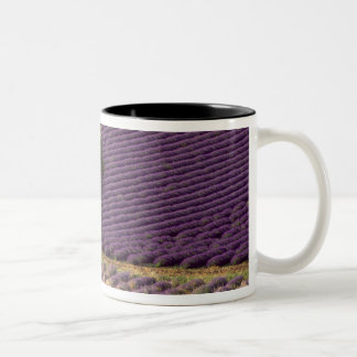 Lavender field in High Provence, France Two-Tone Coffee Mug