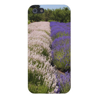 Lavender Field iPhone 5 case