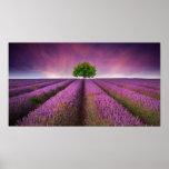 Lavender Field Landscape Summer Sunset Poster