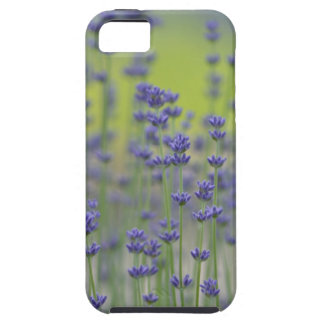 Lavender Field of Flowers iPhone SE/5/5s Case