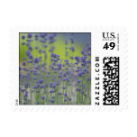 Lavender Field Postage Stamps