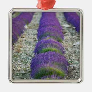 Lavender field Provence France Ornaments
