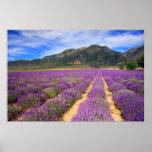 Lavender Fields Forever Print