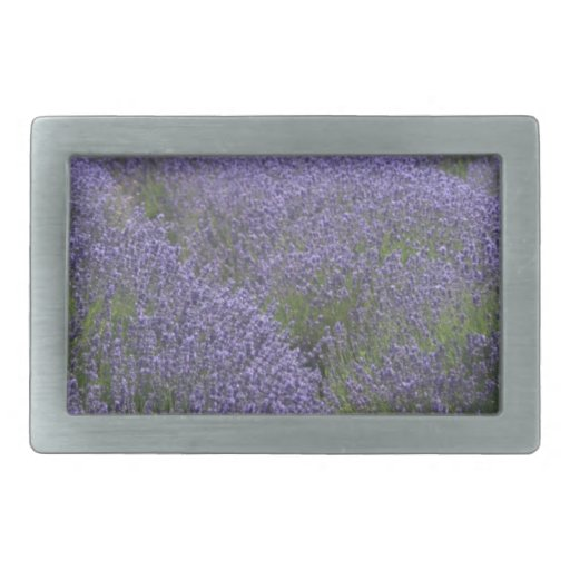 Lavender fields, Kent, UK Rectangular Belt Buckles