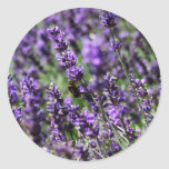 Lavender Fields Stickers