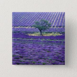 Lavender fields, Vence, Provence, France Button