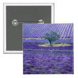 Lavender fields, Vence, Provence, France Pinback Buttons