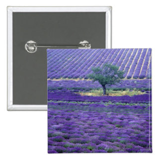 Lavender fields, Vence, Provence, France 2 Inch Square Button