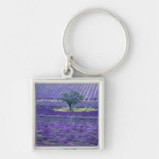 Lavender fields, Vence, Provence, France Key Chains