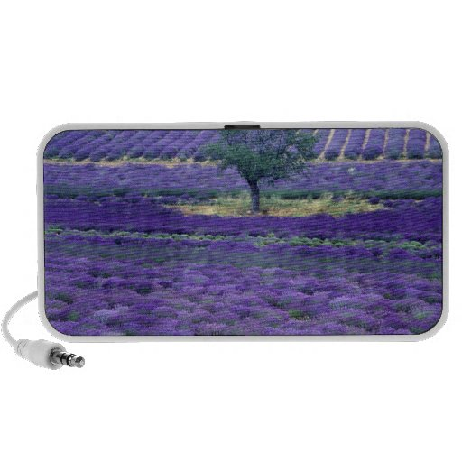 Lavender fields, Vence, Provence, France Laptop Speaker