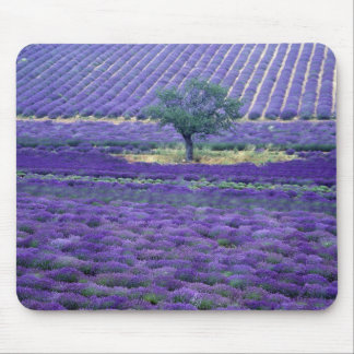 Lavender fields Vence Provence France Mousepad