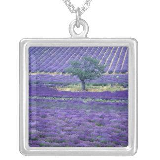 Lavender fields, Vence, Provence, France Pendant