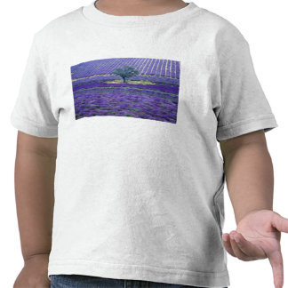 Lavender fields, Vence, Provence, France Tees