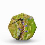 Lavender flower dragonfly acrylic award