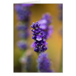 Lavender flower macro photography greeting card