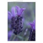 Lavender Flower Photo Greeting Card