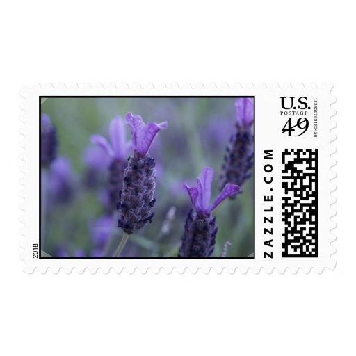 Lavender Flower Photo Postage Stamp