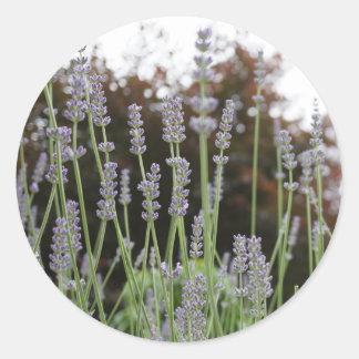 Lavender Flower Round Stickers
