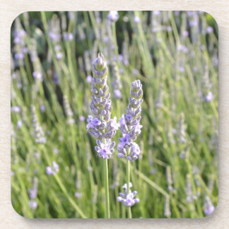 Lavender Flowers Field Coaster Set