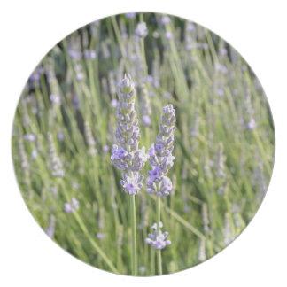 Lavender Flowers Field Plate