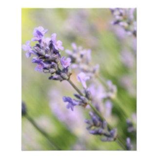 Lavender Flowers. Flyer