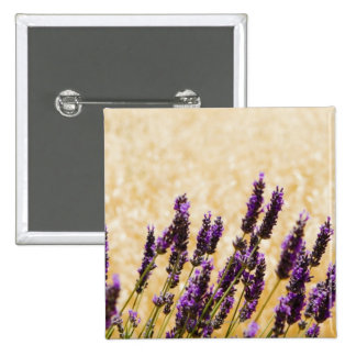 Lavender flowers in a field, Siena Province, 2 Inch Square Button