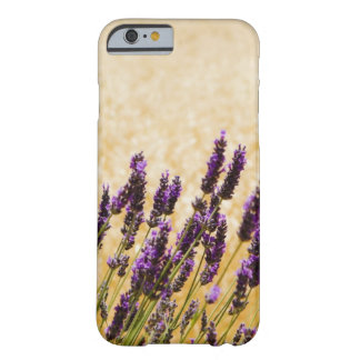 Lavender flowers in a field, Siena Province, Barely There iPhone 6 Case