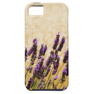 Lavender flowers in a field, Siena Province, iPhone SE/5/5s Case