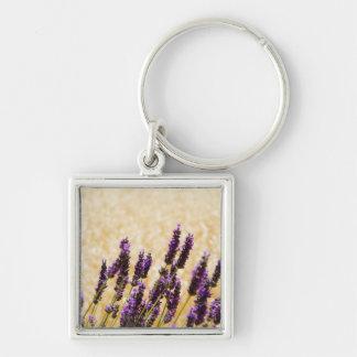 Lavender flowers in a field, Siena Province, Keychain