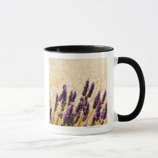 Lavender flowers in a field, Siena Province, Mug
