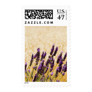 Lavender flowers in a field, Siena Province, Postage Stamp